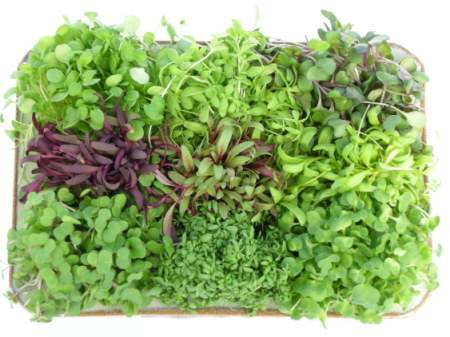 Herbs for Micro Mix & Salads
